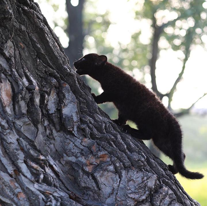 露娜在爬树.jpg